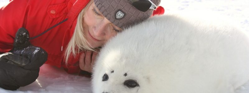 Brilliant Studio Teams with IFAW to Create Seal Hunt Video