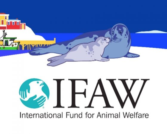 Seal Hunt Activism Video for IFAW